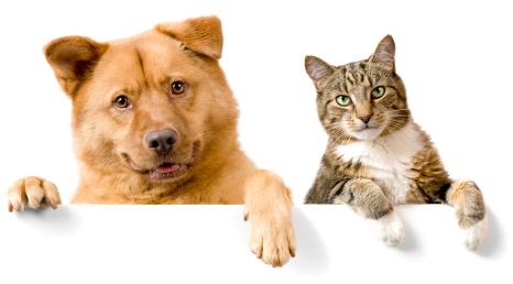Çekmeköy Pet Shop Pansiyon